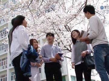 2016 창신대학교 교내 벚꽃 영상